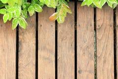 Старое деревянное с зелеными листьями Стоковые Фото
