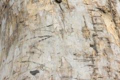 Старое дерево без расшивы Стоковые Изображения