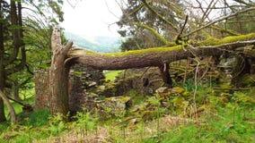 Старое дерево, более старый сельский дом стоковое фото rf