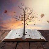 Старое дерево в библии Стоковые Изображения RF