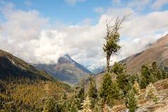 Старое дерево в осени Стоковая Фотография RF