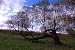 Старое дерево в поле стоковая фотография