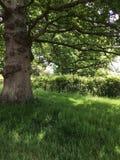 Старое дерево в сельской местности лета Стоковая Фотография