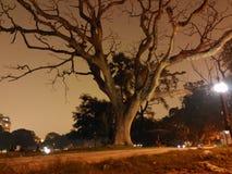 Старое дерево на на ноче 2 Стоковые Изображения RF