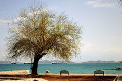 Старое дерево стоя на пляже стоковые фото