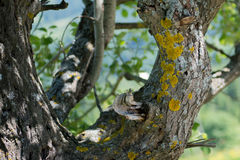 Старое дерево с желтыми точками Стоковое фото RF