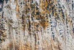 Старое дерево дуба Стоковое Фото
