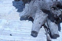 Старое дерево укореняет на открытом воздухе Стоковое Изображение RF