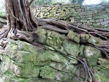 Старое дерево стоковое фото