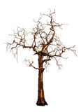 Старое и мертвое изолированное дерево Стоковые Изображения