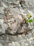 Старое и молодое дерево стоковые фотографии rf