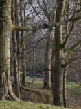 Старое качание 2 дерева Стоковое Изображение