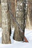 Старое корокоствольное оружие около дерева березы в лесе зимы Стоковые Фото