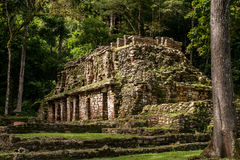 Старое майяское здание в Yaxchilan Стоковые Фотографии RF