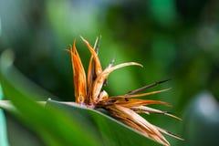 Старое мертвое цветение цветка которое росло на зеленом растении стоковые изображения rf