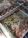 Старое мшистое brickwall Стоковые Фото