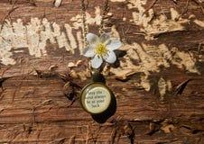 старое ожерелье на древесине Стоковое фото RF