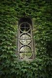 Старое окно окруженное листьями Стоковые Изображения