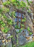 Старое окно с плющом Стоковые Изображения