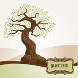 старое оливковое дерево Стоковое Изображение