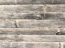 Старое один из бамбуков Стоковое Фото