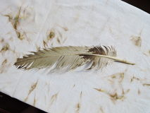Старое перо птицы Стоковое Фото
