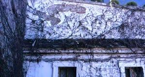 Старое пугающее поместье с лианой стоковое изображение