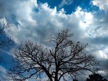 Старое сухое дерево с темными цветами, небо с интенсивными цветами стоковое фото rf