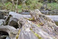Старое, упаденное дерево на потоке скалистой горы в верхней долине Суонси, южный уэльс, Brecon светит Стоковые Изображения RF