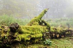 Старое упаденное дерево Стоковая Фотография RF