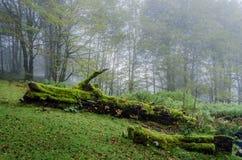 Старое упаденное дерево Стоковое фото RF