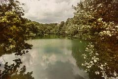 Старое фото озера в forrest Стоковые Фото