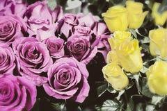 Старое фото цвета роз Стоковая Фотография