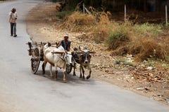 Старое araba вытягиванное парами быка зебу на индийском шоссе стоковые фото