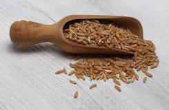 Старое kamut зерна, пшеница Khorasan Стоковая Фотография