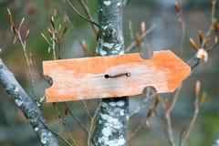 Старое waymarker на хоботе в древесине Стоковая Фотография RF