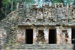 Стародедовские майяские руины на Yaxchilan, Чьяпасе, Мексике стоковая фотография