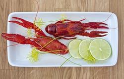 Стартер Crayfish Стоковые Фотографии RF