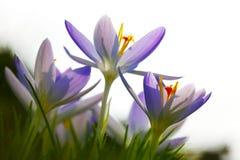 Старт весны стоковое фото rf
