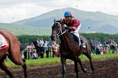 Старт участвуя в гонке лошадей начиная гонку Стоковая Фотография RF