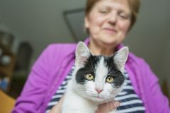 старуха с котом стоковое изображение