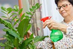 Старшая женщина распыляя завод с чисто водой от бутылки брызга Стоковые Фотографии RF
