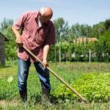 Старшая мужская работа в саде стоковые фотографии rf