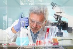 Старшее исследование наук о жизни исследуя в современной научной лаборатории Стоковое фото RF
