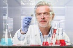 Старшее исследование наук о жизни исследуя в современной научной лаборатории Стоковые Фотографии RF