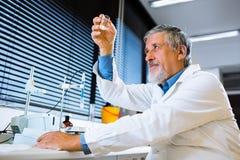 Старшее мыжское научное исследование приведения в исполнение исследователя в лаборатории Стоковое Изображение RF
