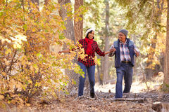 Старшие Афро-американские пары идя через полесье падения стоковая фотография rf