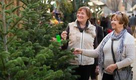 Старшие женщины выбирая спрус рождества стоковые изображения rf