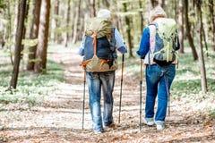 Старшие пары в лесе стоковые изображения