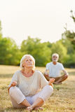Старшие пары делая йогу в парке Стоковое Фото